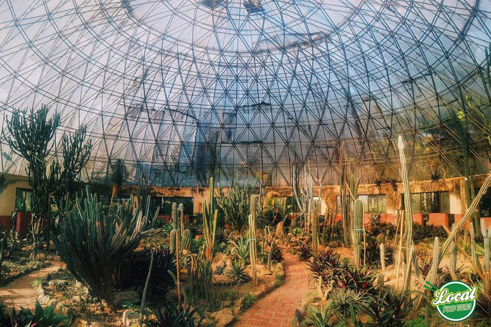 Cactus Garden In Ba Vi